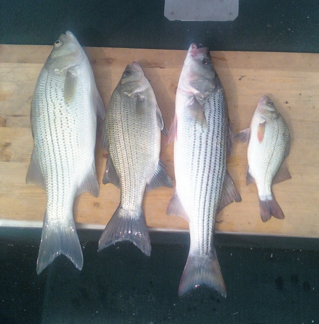 Kansas fishing report reports from anglers july sept for Kdwp fishing report